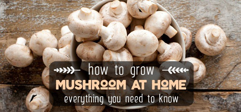 how-to-grow-mushroom