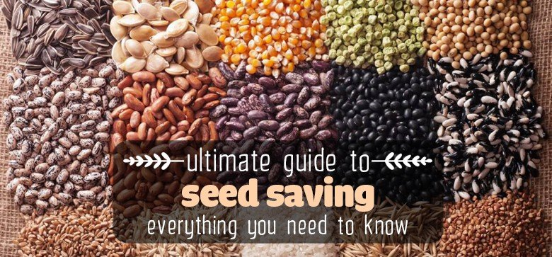 seed-saving-guide