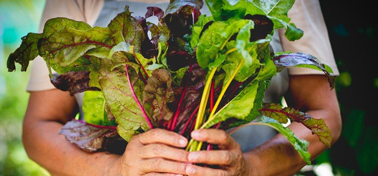 What Does Swiss Chard Taste Like? Does