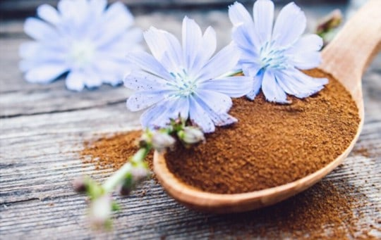 chicory coffee side effects