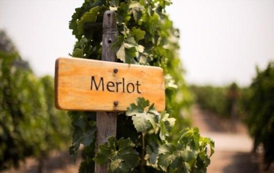 climate and terroir for merlot
