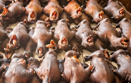 dangers of eating bat meat