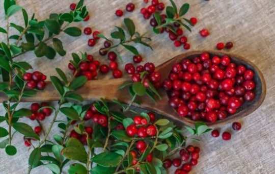 health and nutritional benefits of lingonberries