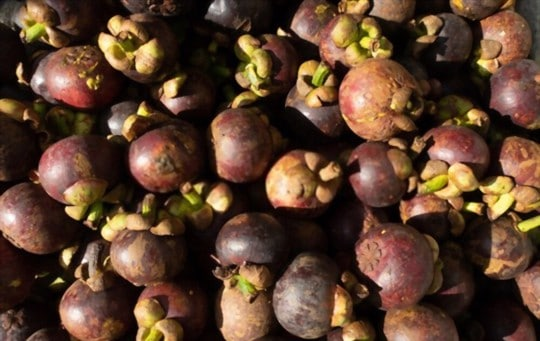 health and nutritional benefits of mangosteen