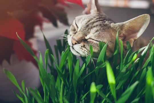 how to store cat grass