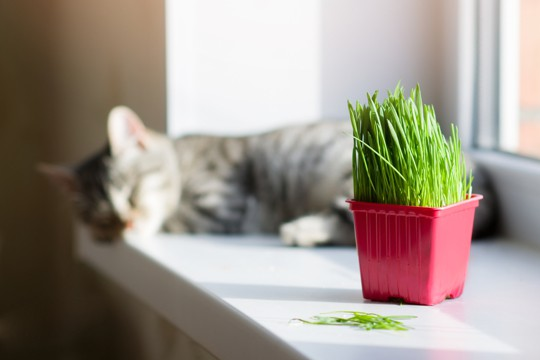 how to tell if cat grass is bad