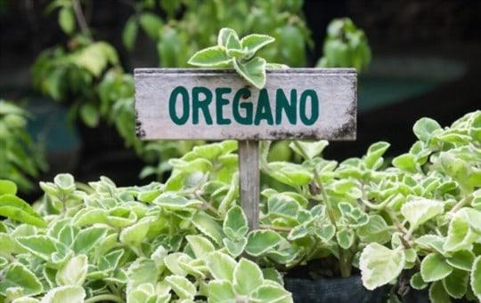how to use oregano leaves