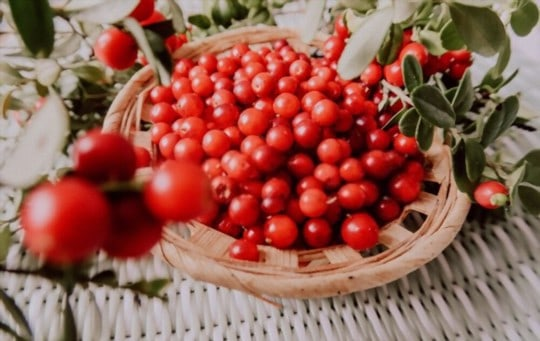 is lingonberry the same as cranberry