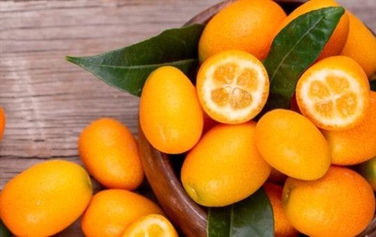 loquat vs kumquat