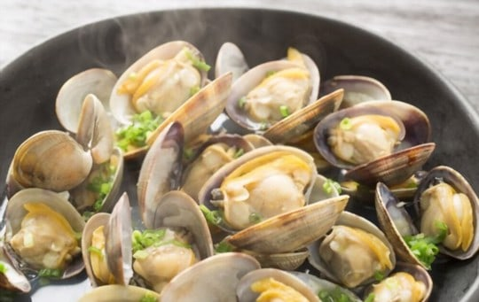 oysters vs clams vs mussels vs scallops