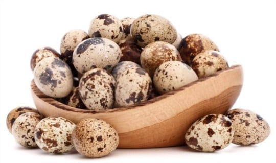 what are quail eggs
