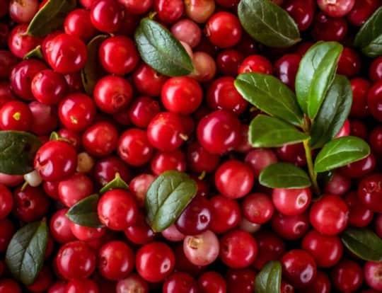 what do lingonberries taste like