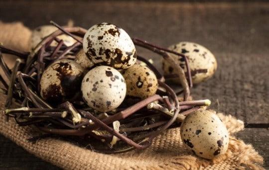 what do quail eggs taste like