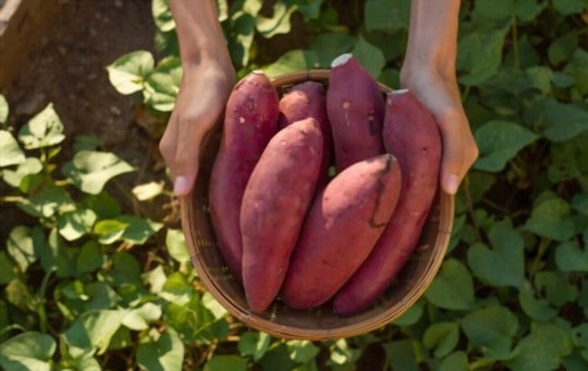 what do sweet potatoes taste like