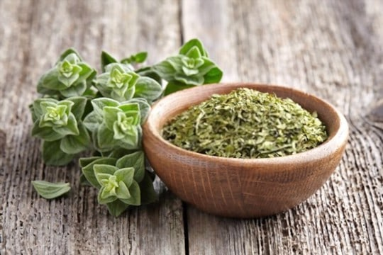 what does oregano look like