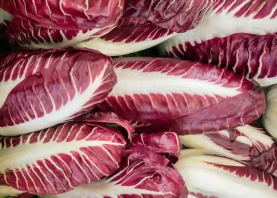what does red chicory taste like