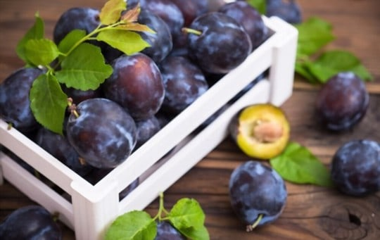 what happens if you eat a bad plum