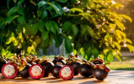 what is a mangosteen