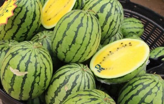where to buy yellow watermelon