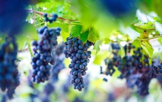 how long do grapes last