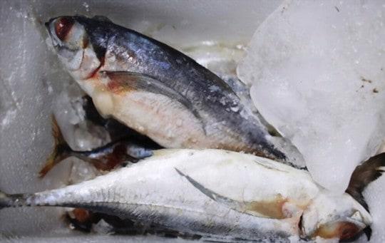 how long does frozen fish last