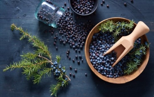how to choose juniper berry