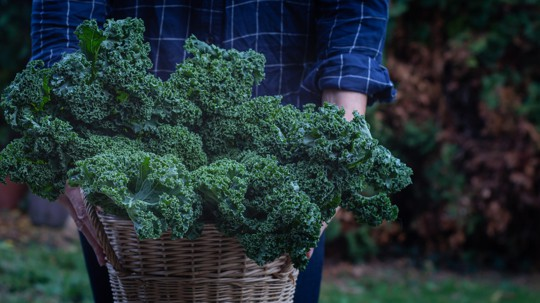 how to choose kale