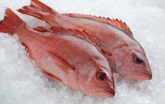 how to store red snapper