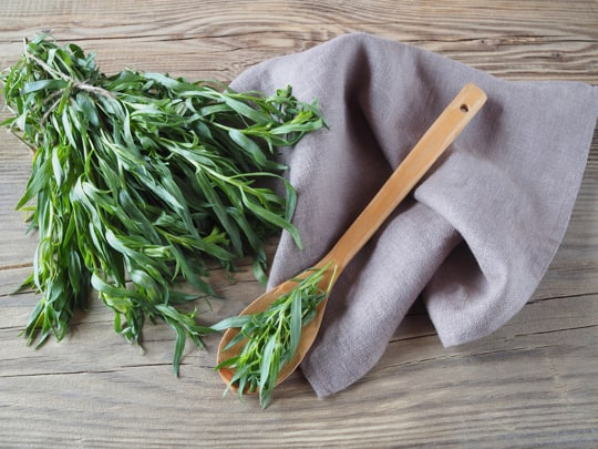 how to store tarragon