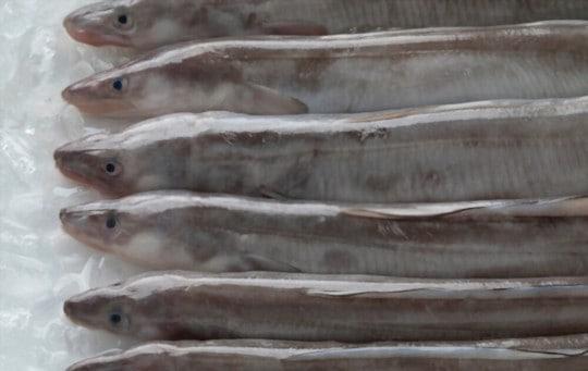 nutritional benefits of eels