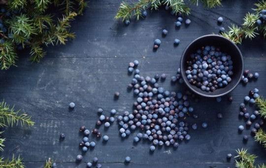 nutritional benefits of juniper berries