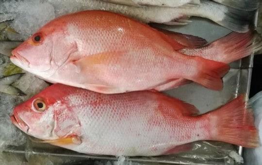 red snapper vs white fish
