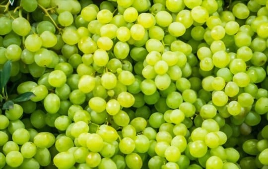 what are grapes