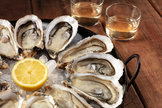 what are oysters