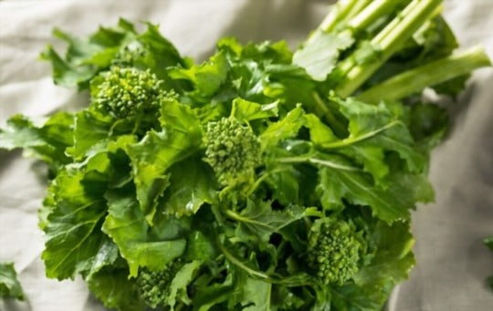 what is broccoli rabe