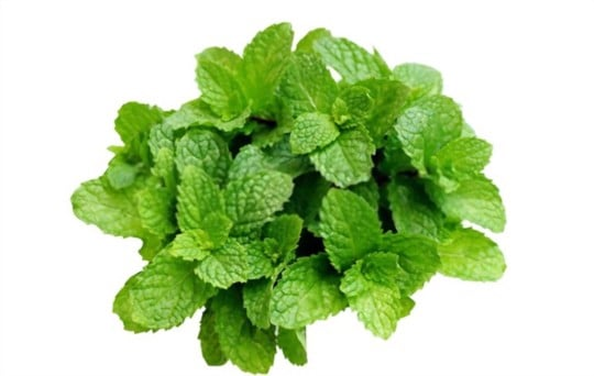 how to tell if frozen mint is bad