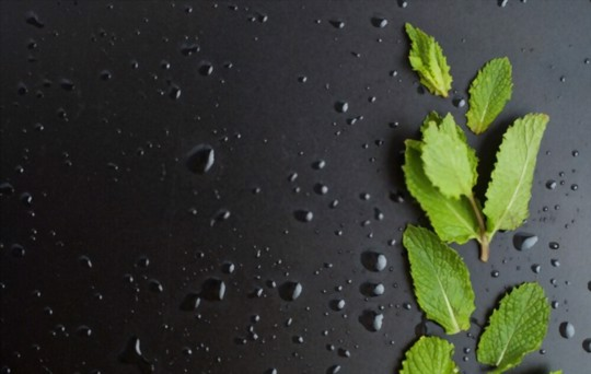 how to thaw frozen mint