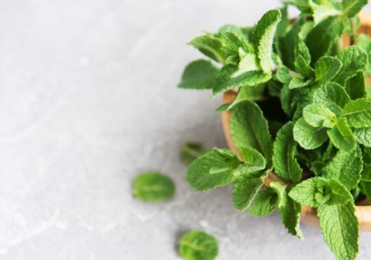 how to use thawed mint in recipes