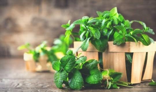 tips on choosing mint