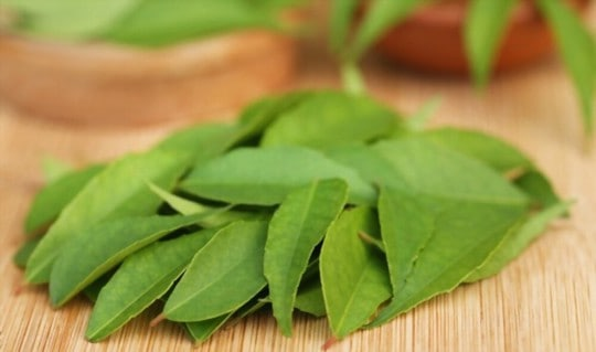 best substitutes for curry leaves