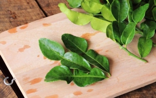 The 5 Best Substitutes for Kaffir Lime Leaves