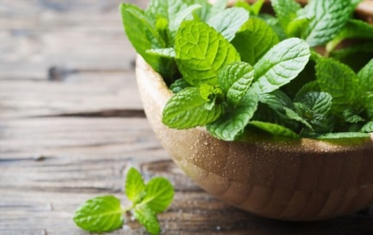 best substitutes for mint