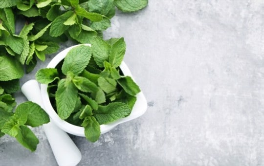 The 5 Best Substitutes for Mint