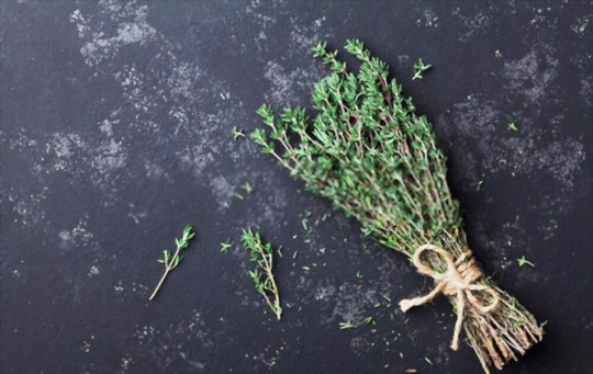 what is thyme